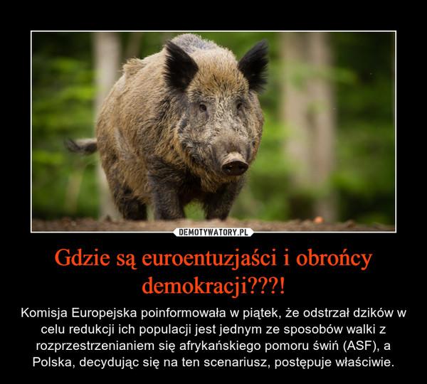 Gdzie są euroentuzjaści i obrońcy demokracji???! – Komisja Europejska poinformowała w piątek, że odstrzał dzików w celu redukcji ich populacji jest jednym ze sposobów walki z rozprzestrzenianiem się afrykańskiego pomoru świń (ASF), a Polska, decydując się na ten scenariusz, postępuje właściwie.
